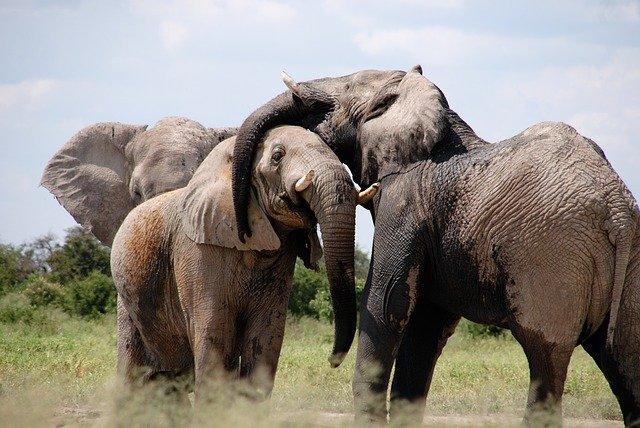 Besøg fantastiske Afrika